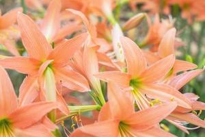 närbild av orange blommor