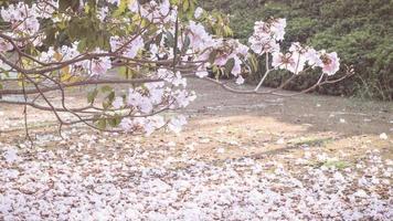 rosa blommor och kronblad foto