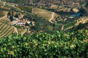 vingårdar i dourodalen, Portugal foto