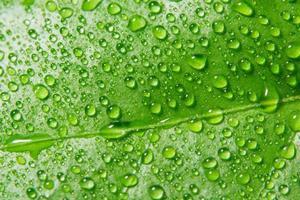 droppar på ett grönt blad