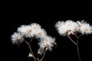 gräs blomma närbild