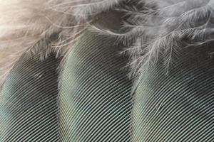 fjäder makro bakgrund foto