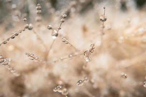 droppar vatten på en blomma