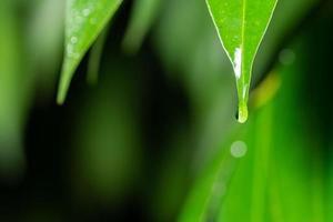 droppar vatten på en växt foto