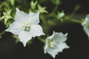 vit blomma närbild