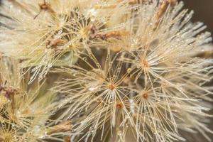 närbild för vild blomma