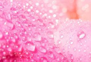 vattendroppar på rosenblad