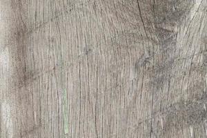 trä textur bakgrund foto
