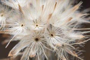 vit blomma närbild foto