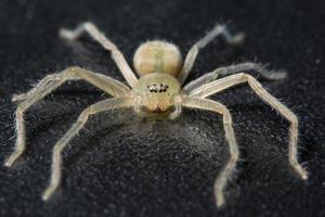 spindel på svart yta