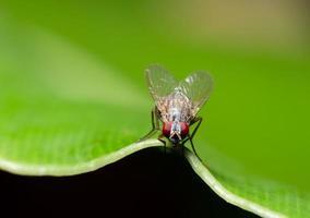 flyg på grönt blad foto
