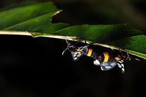 fjärilar på en växt foto
