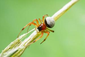 spindel på en växt
