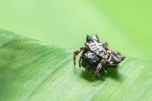 spindel på ett blad