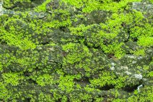grön moss bakgrund
