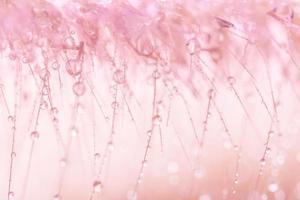 vattendroppar på vilda blommor, suddig bakgrund foto