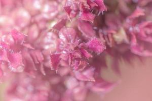 ljusrosa blomma bakgrund