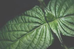 mörk blad bakgrund