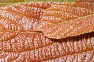 brun blad bakgrund foto