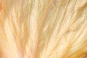 orange blomblad