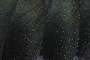 vattendroppar på en fjäder