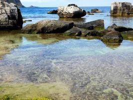 alger i vattnet foto