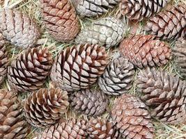hög med pinecones foto