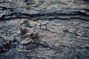 brun träyta foto