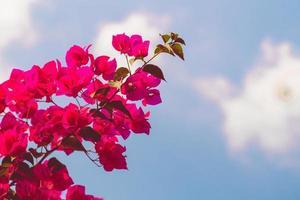 röda blommor på himlen foto