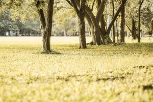gräsbevuxen äng under dagen foto