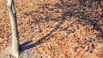 höstlöv på marken foto