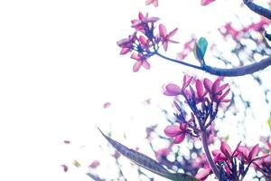 rosa blommigt träd foto