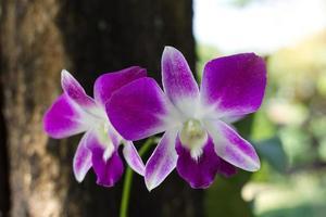 lila orkidéer utanför