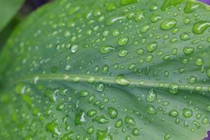 vatten på ett blad foto