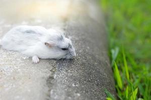 hamster på marken foto