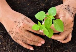 människans händer som håller träd som planterar unga foto