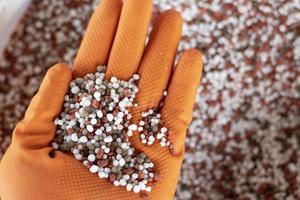 kemiskt gödningsmedel i händerna på jordbrukare med naturbakgrund.