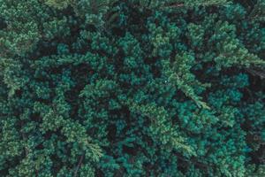 närbild av en buske foto