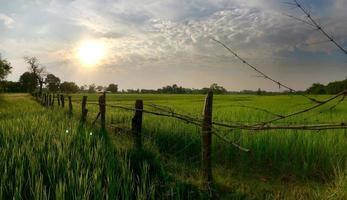 fält på landsbygden