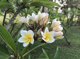 vita och gula blommor utanför