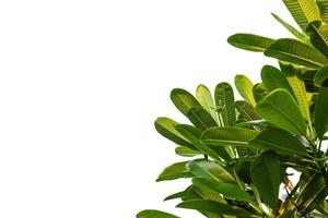gröna blad på en vit bakgrund foto
