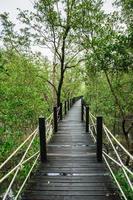gångväg i mangroveskogen foto