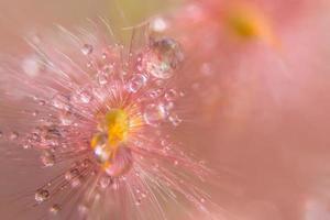 vattendroppar på vilda blommor, närbild