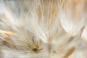 närbild för vild blomma foto