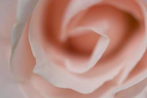 rosa rosmakro