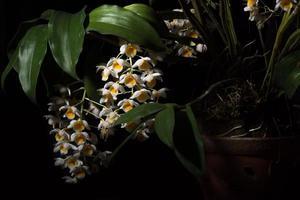 vit blomma på svart bakgrund