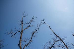 torra grenar mot himlen foto
