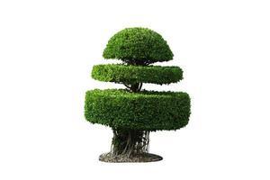 bush trimmad dicut foto