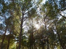 träd utomhus i trädgården foto