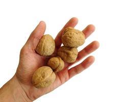 nötter i handen på vit bakgrund foto